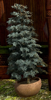 TT Shroud of the Avatar Potted Blue Spruce 6-Pack