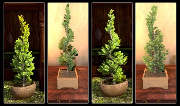 TT Shroud of the Avatar Indoor Juniper Tree Pack