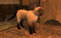 TT Shroud of the Avatar Siamese Cat