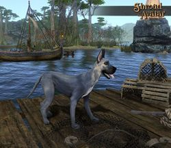 TT Shroud of the Avatar  Grey Great Dane