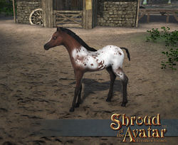 TT Shroud of The Avatar Appaloosa Foal Pet