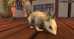 TT Shroud of The Avatar White Squirrel Decoration Pet